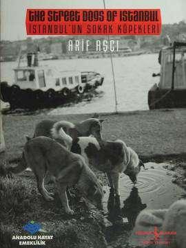 İstanbul'un Sokak Köpekleri / The Street Dogs of Istanbul