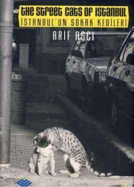 İstanbul'un Sokak Kedileri / The Street Cats of Istanbul